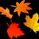 Imagen comunicados otoño